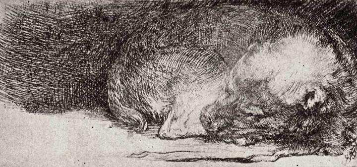 The Sleeping Dog. Remrandt. 1633