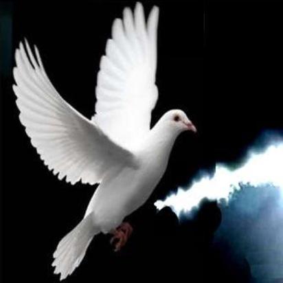 1 Peace dove